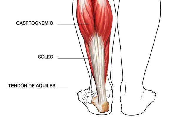 músculo sóleo