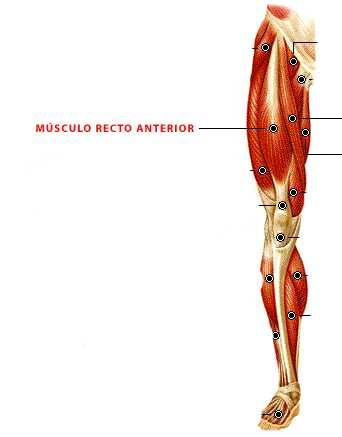 Músculo Recto anterior