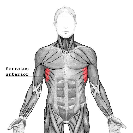 Ejercicios para el Músculo Serrato