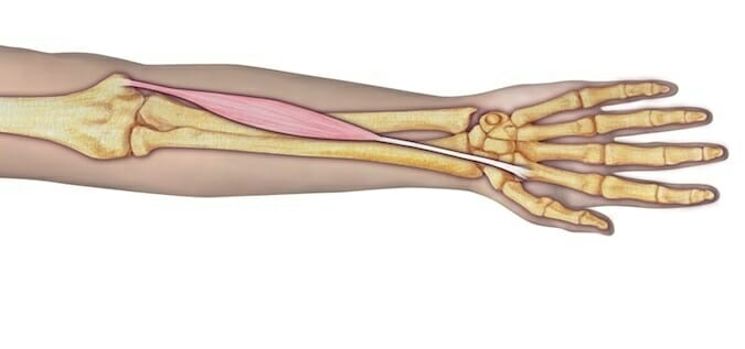 Flexor Radial del Carpo